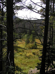 It was situated right before reaching a pretty nice meadow that the trail seemed to stop at.