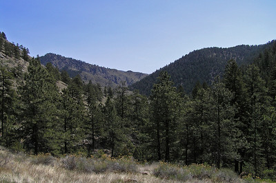 This is the view from that bench looking back east along the Poudre Canyon  .............