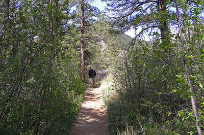 The trail starts off by following the Poudre river for a few hundred yards.  This is a good short hike if you have small children.