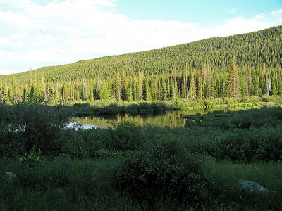 After I got my camper set up, I took a hike around the area.  Walked down the road a ways also to look at the nice beaver ponds.  Pretty area around there.  Lots of beaver ponds, trees, and one or two mosquitoes.