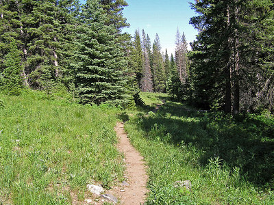 The entire trail was a sequence of small to medium meadows.  There were sections where you had to gain altitude, but you always came back to intervals of nice meadows.