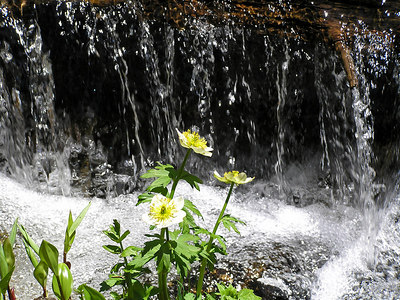 "And, of course,  I have to take a ""flowers against the waterfall"" picture : )"