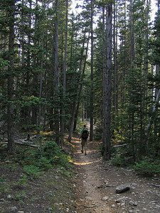 """Not sure why, but the trail seemed """"flatter"""" going back down than coming up earlier.  Both in the pines........"""