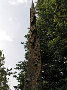 This twisted remnant of a tree was interesting to both Conor and myself.  The photo does not do it justice.