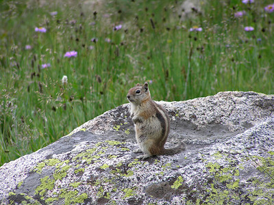 Couldn't resist taking a photo of this chipmunk : )