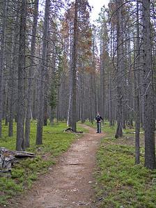 Neat open woods.  Nice flat trail : )