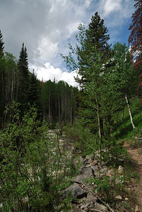 The trail hugs close to the creek for close to 4 miles or more.  The valley is somewhat narrow and does not offer any long scenic views, but it is a nice hike in and of itself.  It varies between pine and aspen groves as you walk along it.