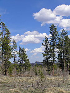 Here is a photo of the place where I first found most of the pasques (also a good view north towards Wyoming).