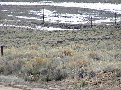 The deer is not really spooked, but definitely leaving the area : ) Although there is still a little snow on the flats, it's fairly warm.  A light jacket is all that is needed.  Less once you get moving.