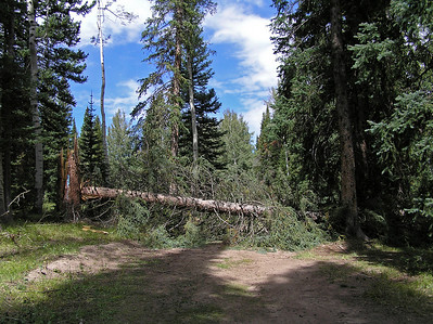 So, I turned onto the road but did not get more than 100 yards before finding a rather large tree in my way.  It looked as if it had fallen across the road sometime this summer and no one had bothered removing it.  While it appeared that a jeep, or something smaller, could get around it through the forest, I decided not to try doing that in my truck.  I went back to the main road and pulled off to park it while I went hiking.   I started back down road #162.  Here is a photo of the tree that was laying across the road.  More than likely it has been removed.  That said, it is only a short hike from here to the actual trail head, so no big deal if you need to hike around it.