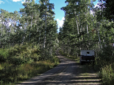 Well, I did not go much up the road (which started climbing into the hills/mountains right away) before I entered a new woodland environment.  Aspens.  Lots of aspens.  The Elkhorn mountains have mucho aspens.  This would be a great place to go for fall colors.