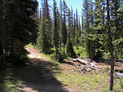 "I kept going up the forest service road (not seeing anyone for the last 4 miles or so) until it looked like the ""road"" was disappearing."