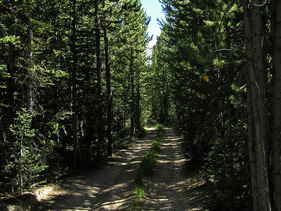 Eventually I just had to quit.  It was getting too confusing and it did not look as if I was getting close to my objective.  So,  I went back to the truck and headed back to the same forest service road that I had used a week ago to get to the trail that led me (after a longish hike) up to the ridge (and the moose). But, this time I went further until the road turned into a 4wd road and I came close to losing my mirrors (and paint job) on the truck.  So, I parked the truck and started hiking.  Went around 4-5 miles to find out that: 1.  Yes, looked like the road went where I wanted to go. 2.  If I didn't mind losing some paint off of my truck, I could probably drive the entire road to it's end. This is what part of the road looked like.