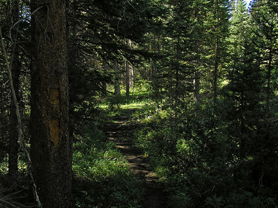 """Prior to starting """"uphill"""" you go through a very pleasant section of woods.  The slash mark reinforces the knowledge that you are on the right trial."""