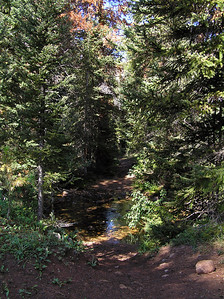 You cross Newcomb Creek shortly after entering the trees.  I would recommend this as one of two (or so) good places to stop and eat lunch, take a break, etc. (if you have not already done so).  Of course, at the speed I travel, I rarely need to take a break : )