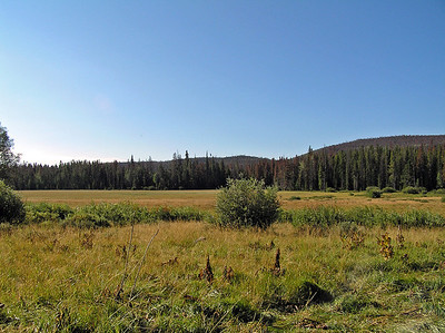 And there are a lot of really pretty meadows you hike through/by such as these.