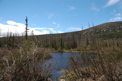 Went by some small beaver ponds on the way up the road.  Course, this time of year the insects were pretty much zero.  So, later in the summer, a person just might want to make sure that they had some mosquito repellent with them.  Just in case.