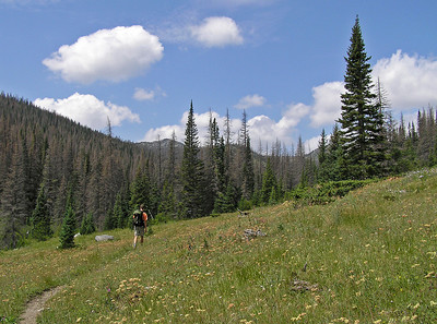 But we did start to cross more open meadows as we gained altitude.......