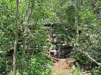 The Bear Creek trail (or, my assumption is that it was the Bear Creek trail) followed a pretty stream up into a relatively narrow mountain valley.  It was very nice and the time went fast.  We came upon the ruins of a cabin that, based on some nearby mine tailings, had probably been used by miners.  Conor takes a quick peek inside.