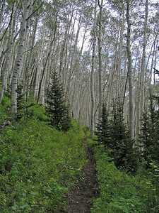 The trail started off pretty nice.  Lots of aspen with just a gradual climb.  No other people on the trail then, or later.