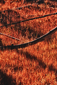 Autumn Shadows: late afternoon light in Yellowstone National Park.