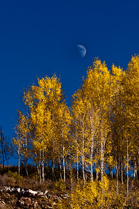 Aspen Moon