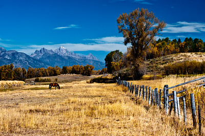 Teton Grazing