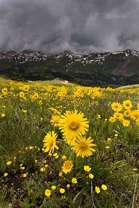 The Sun & The Storm from the Saddle of Red Mountain #3, San Juan Mountains - Colorado Wildflowers - Emily Jacob - July 2015
