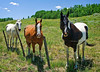 Welcoming Committee in the Cimarron Valley - Colorado On Top of the World Tour - Jerry Negele - July 2010