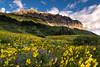 Mule Earred Sunflowers and Blue Lupine beneath Gothic Mountain, Crested Butte, Colorado - Colorado Wildflowers - Mark Gromko - July 2015