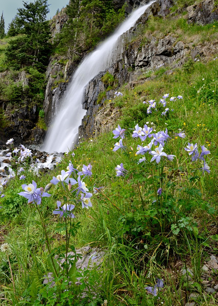 Columbines at Cunningham Gulch Waterfall, San Juan Mountains - Colorado Wildflowers - Paul Riewerts - July 2015