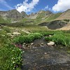 Clear Lake Wildflowers
