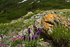 High Mountain Garden on the Saddle of Red Mountain #3, San Juan Mountains - Colorado Wildflowers - Nancy Varga - July 2015