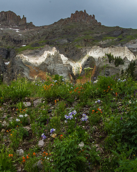 Capturing the Light in Yankee Boy Basin, San Juan Mountains - Colorado Wildflowers - Nancy Varga - July 2015
