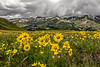 Before the Storm, San Juan Mountains - Colorado Wildflowers - Sue Cole - July 2015