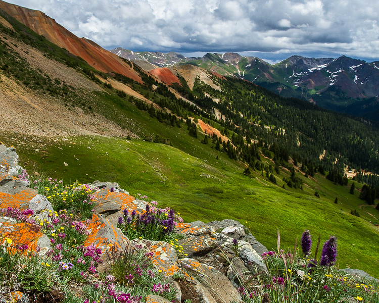 Mountain Garden with a View of Red Mountain #3, San Juan Mountains - Colorado Wildflowers - Nancy Varga - July 2015