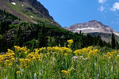 Basin Wildflowers