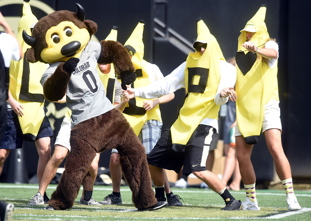 . Chip and his bananas dance during the game with Texas State on Saturday. For more photos, go to buffzone.com.  Cliff Grassmick / Staff Photographer/ September 9, 2017