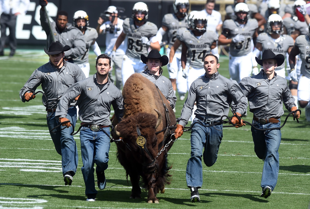 . Ralphie runs with her handlers before  the game with Texas State on Saturday. For more photos, go to buffzone.com.  Cliff Grassmick / Staff Photographer/ September 9, 2017