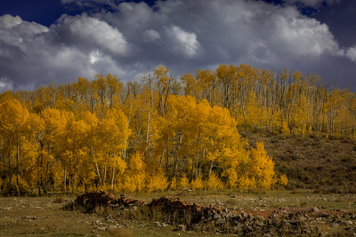 Aspen and Old Stone Wall