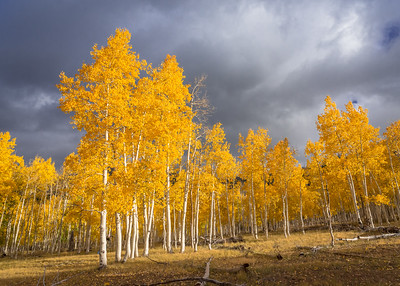 Autumn Storm, Dixie National Forest