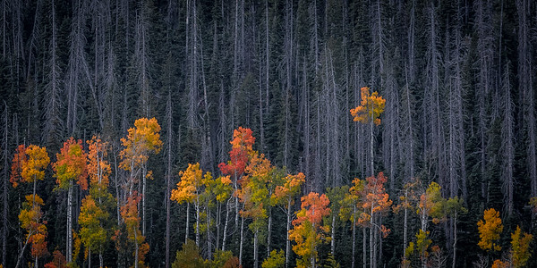 Aspen, Utah High Country
