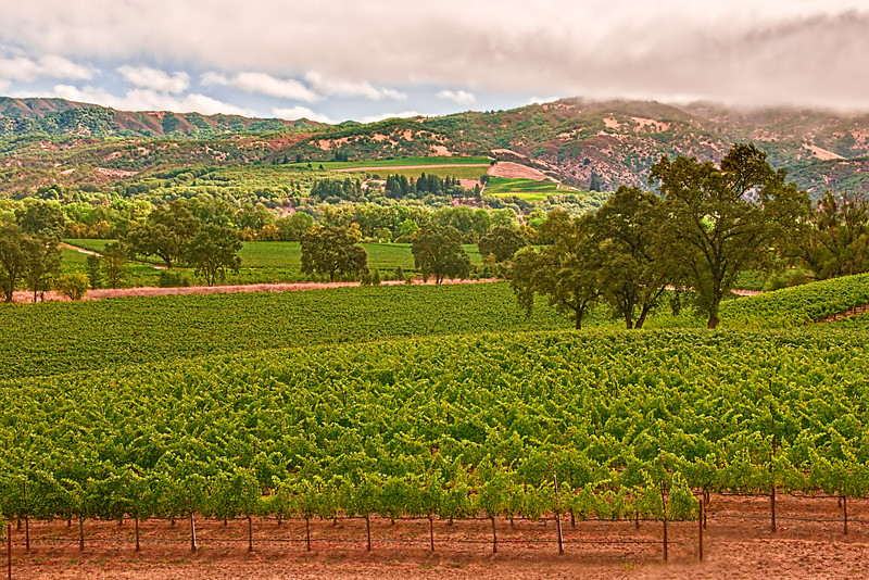 'Vineyard Upon Vineyard'