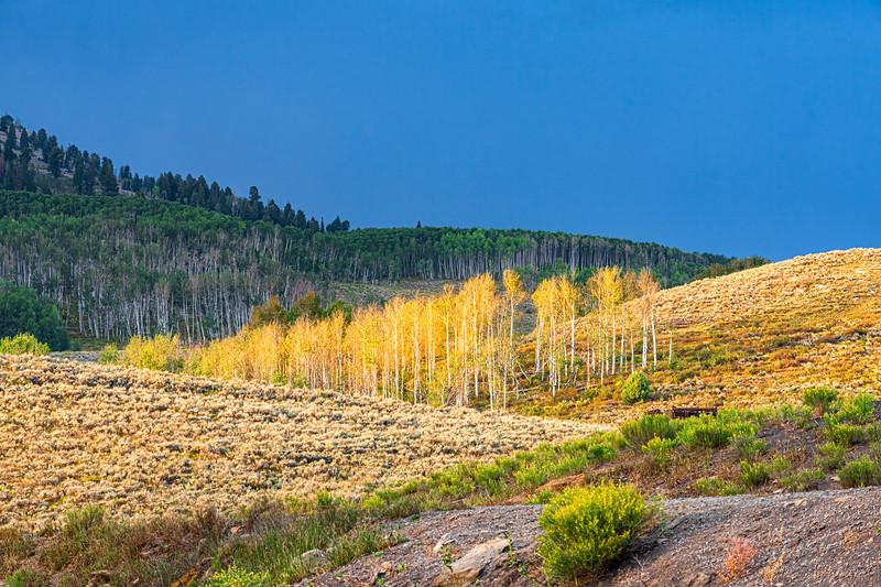Star Mountain Ranches