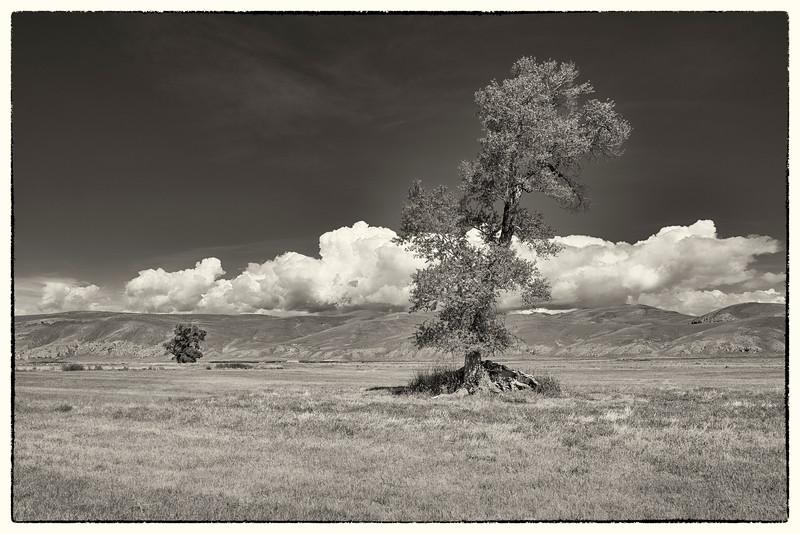 'Cloud Trees'