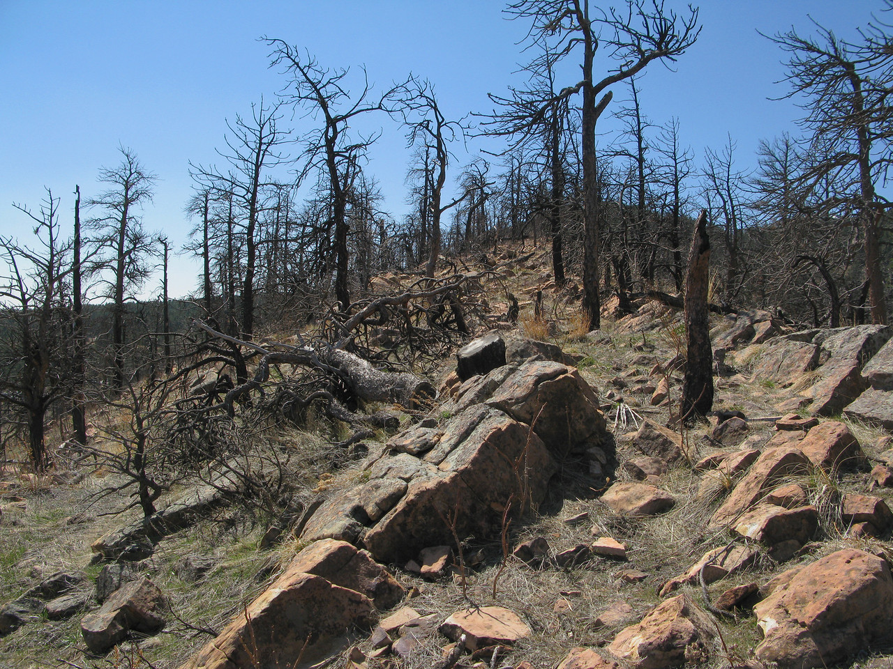 A few burned trees at the top of a ridge in El Dorado Springs, CO
