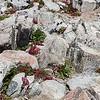 Mount Audubon Summit Succulents