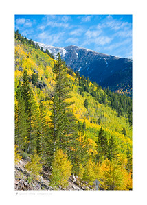 Autumn Aspen, Gunnison National Forest, CO