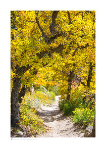Autumn color along Inner Canyon Trail, Castlewood Canyon SP, CO