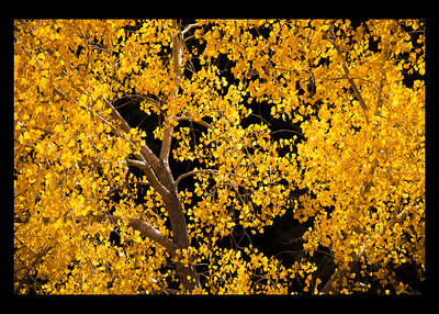 Aspen in Fall colors w/black border